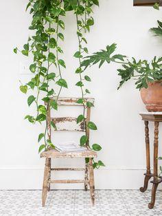 Déco blanche et plantes vertes - La véranda de Melissa Miranda à Boston