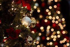 Image de christmas, light, and christmas tree