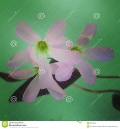 Flower - Download From Over 62 Million High Quality Stock Photos, Images, Vectors. Sign up for FREE today. Image: 95428406