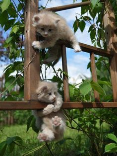 "Kittens on Their ""Jungle Jim"" :) There is nothing better in life than kittens."