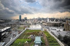 As holiday feasts begin, Laura Lawson surveys the fruitful history of urban farming.Brooklyn Grange, a 1-hectare organic farm that spans two rooftops in New York City.The floating gardens of Aztec …