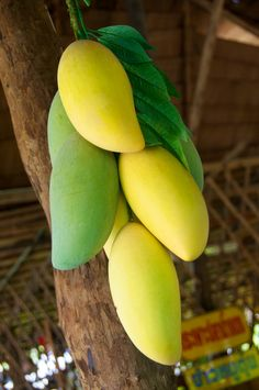 Fresh Mangoes on sale, Koh Lipe, Thailand