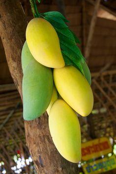 Fresh Mangoes on sale, Koh Lipe, Thailand