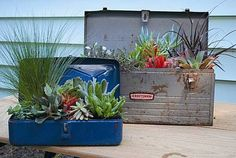 Love this look of succulents in tool boxes.