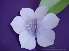 Cards ,Crafts ,Kids Projects: Paper Flower Tutorials -14 types of flowers