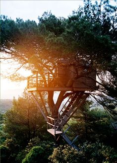 tree cabin #adventure #wanderlust