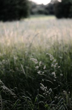 Unknown Meadows.