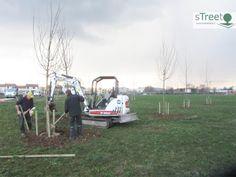 Piantare alberi in Italia