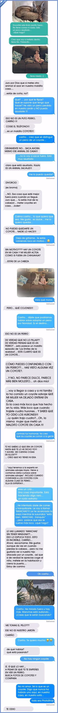 Le dice a su marido que ha adoptado un perro cuando en realidad es un coyote salvaje   Gracias a http://www.vistoenlasredes.com/   Si quieres leer la noticia completa visita: http://www.estoy-aburrido.com/le-dice-a-su-marido-que-ha-adoptado-un-perro-cuando-en-realidad-es-un-coyote-salvaje/