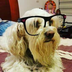 Intelectual ando...