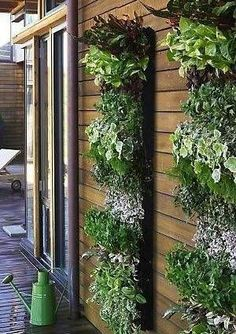 Vertical garden on the side of a house