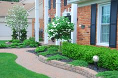 Tree form hydrangea, White flowering dogwood, boxwood and juniper evergreens. curvy brick paver walkway and wall.