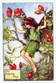 Rosehip Flower Fairy Vintage Print by Cicely Mary Barker.first published in London by Blackie, 1926 in Flower Fairies of the Autumn.