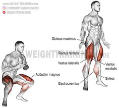 A compound bodyweight exercise. Target muscle: Quadriceps (Vastus Lateralis Vastus Medialis Vastus Intermedius and Rectus Femoris). Synergists: Gluteus Maximus Adductor Magnus and Soleus. Dynamic stabilizers: Hamstrings a Chest Workouts, Gym Workouts, At Home Workouts, Workout Guide, Workout Challenge, Squat Workout, Squat Exercise, Bodybuilding, Muscle Building Tips
