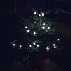 Loving our outdoor baby Christmas tree