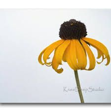 Image result for minimalist contemporary art
