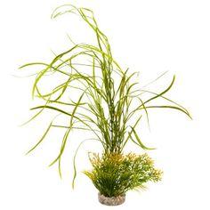 Blue Ribbon Lily Grass Plant - Sale - Fish - PetSmart