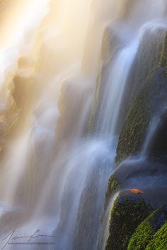 Golden Fall... - Proxy Falls - Oregon - USA