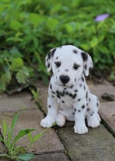 Hi-Line Gift Ltd. Dalmatian Puppy Statue Hi-Line Gift Ltd. Dalmatian Puppy Statue The post Hi-Line Gift Ltd. Dalmatian Puppy Statue appeared first on Animal Bigram Ideen. Best Puppies, Cute Dogs And Puppies, Baby Dogs, Doggies, Cute Animals Puppies, Pet Dogs, Pet Pet, Labrador Dogs, Small Puppies