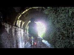 茶畑の中の小さいトンネル