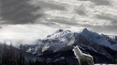 Mountains landscapes trees forest wolves wallpaper | (25367)