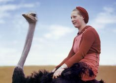 A portrait of a woman riding an ostrich in South Africa, August 1942.