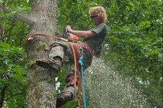 hire an #arborist