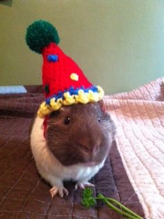 Tiny Festive Party Hats Made of Yarn For Cats, Dogs, and Guinea Pigs