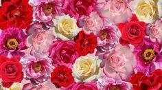 Seksuaalinen elinvoima on polttoainetta unelmiesi ja tavoitteiden toteutumiselle. Se on synnynnäistä luovaa energiaa. Nautinto tekee sinusta itsevarman ja antaa sinulle voimaa mennä rohkeasti kohti tavoitteitasi ja unelmiasi. Sinulla on lupa nauttia, sinä saat kukoistaa. Elämä haluaa sinut, siksi olet täällä! Free Pictures, Free Images, Interior Garden, Red Roses, Flowers, Plants, Pink, Fashion 2017, Puzzle