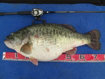 All About Bass Fishing
