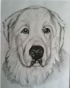 Custom Dog Portrait //  Drawing of your dog by PatouPetPortraits, $75.00