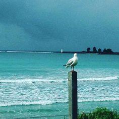 Coffee overlooking the surfers in Port Fairy #surf #portfairy #warrnambool #coffee #girltime @nicki9205 @joe2kelly by katie_kelly11