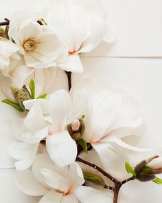 What flowers remind you of spring? These magnolias are beautiful!