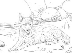 Dingo Lying On The Ground Coloring Page From Category Select 30450 Printable Crafts Of Cartoons Nature Animals Bible And Many More