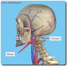 ✔  ПОДВЫВИХ АТЛАНТА  Смещение первого шейного позвонка или подвывих атланта, встречается более чем у 95% людей.  Смещаясь атлант пережимает и ухудшает кровоток к головному мозгу, что является причиной многих болезней.   В центре позвоночника Атлас-Эффект совершенно безопасным образом устраняют этот подвывих.   ***  Консультация и диагностика предоставляется бесплатно. Запись и справки по телефонам в Москве +7 (906) 748-20-60; 8-925-718-09-07.  ✉: direct@atlasorg.ru  Сайт: http://atlasorg.ru