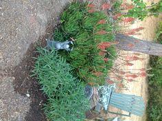 My very own Secret Garden!