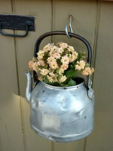 kettle flowers