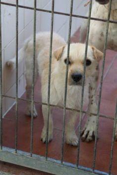 Perro Mini Hembra, Mestizo tipo terrier; Cariñosa, sociable y tranquila. ...