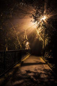 Midnight in mist