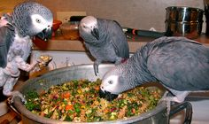 A small video on how to make Chop for your Parrots.