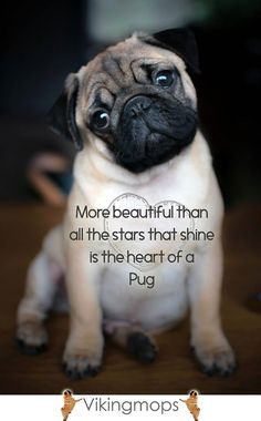 because it's filled with love :)                                                                                                                                                     More #Pug