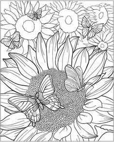 Schmetterling 5 1134
