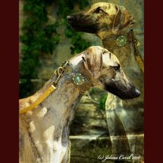 whippet or greyhound collar love it :@ Designer Dog Collars, Designer Dog Clothes, Unique Dog Collars, Pet Collars, Animal Design, Dog Design, Wild Dogs, Whippet, Dog Accessories