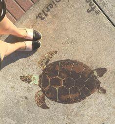 No matter how slow, keep walking !! #tortuga #pintada #keepwalking #sigueysigue #elreysanto #spadrilles #flatshoes #shoes #pretty #comfy