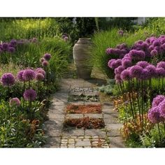 alliums!   and when the celebration of blooms is over, the urn works still as a focal point