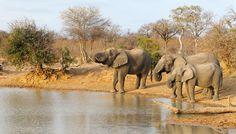 Africa do Sul: Safáris, Museus e Belas Praias   CVC Viagens                                                                                                                                                                                 Mais