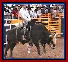 Tuff riding an extra 8 seconds for Lane Cowboy Ranch, Cowboy And Cowgirl, July In Cheyenne, Lane Frost, Rare Animals, Strange Animals, Bucking Bulls, Rodeo Time, Rodeo Queen