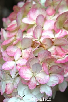 seidenfein 's Dekoblog: Garten Schnappschüsse Dekoblog, Hydrangea, Dark, Beauty, Flowers, Country Living, Handarbeit, Lawn And Garden, Hydrangea Tree