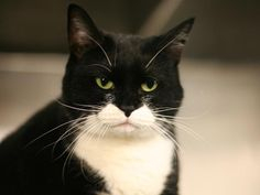 """**SUPER URGENT**""""MARY"""" OWNER DIED**KILLED IN MORNING **JAN 2, 2013**PLEASE SHARE HER AND SAVE HER**4 YRS OLD**SHE IS UNIQUE LOOKING GIRL**TUXEDO KITTY GIRL**NEW YORK SHELTER  **For more information on adopting please read the following:https://www.facebook.com/PetsOnDeathRow/app_396393053713168?ref=ts** IF WE SHARE, WE CAN SAVE MARY**ONLY TAKES 1 PERSON TO FALL IN LOVE**"""