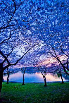 Vivid blue sunrise